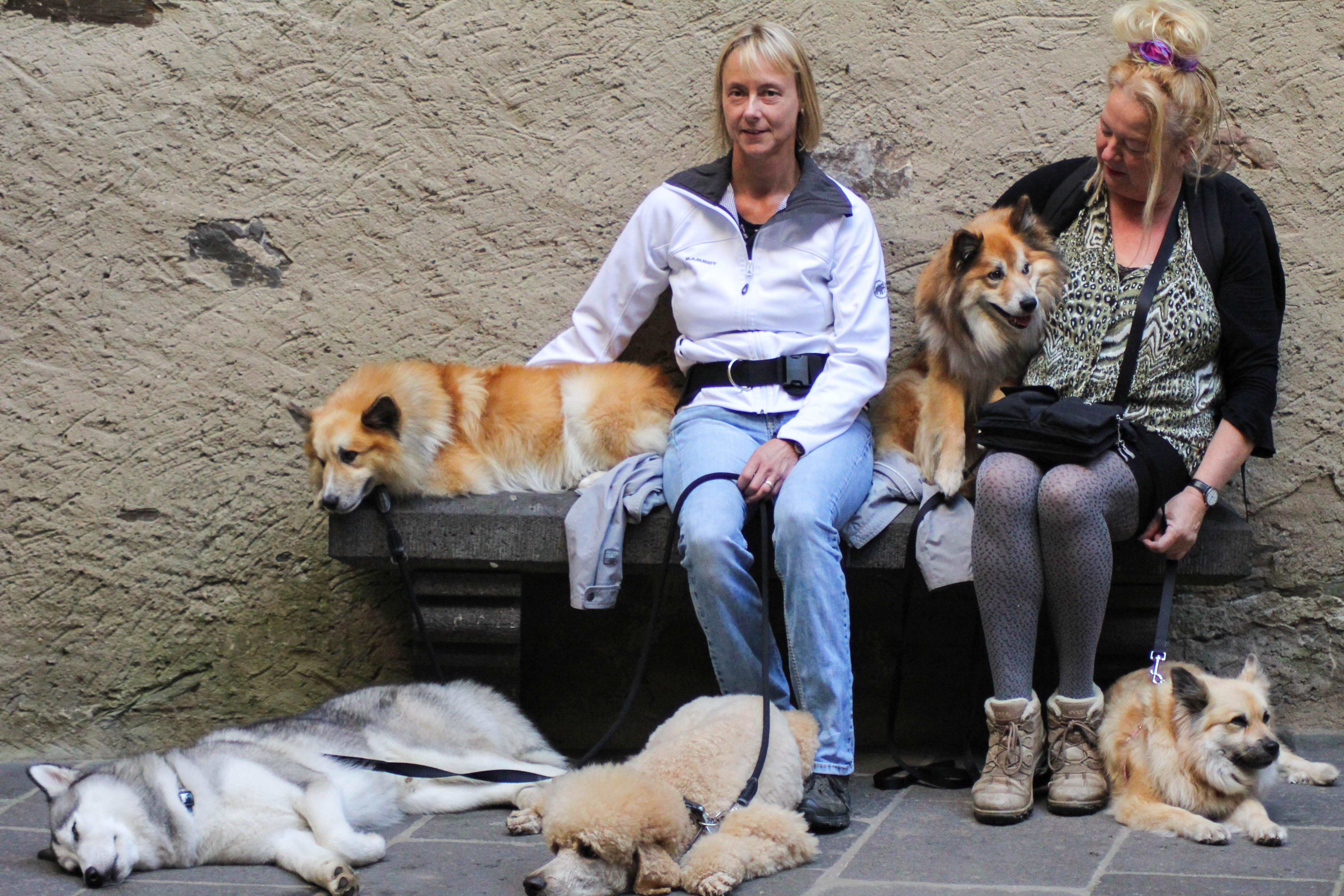 koblenz-icelandic-dogs-husky-3-fb