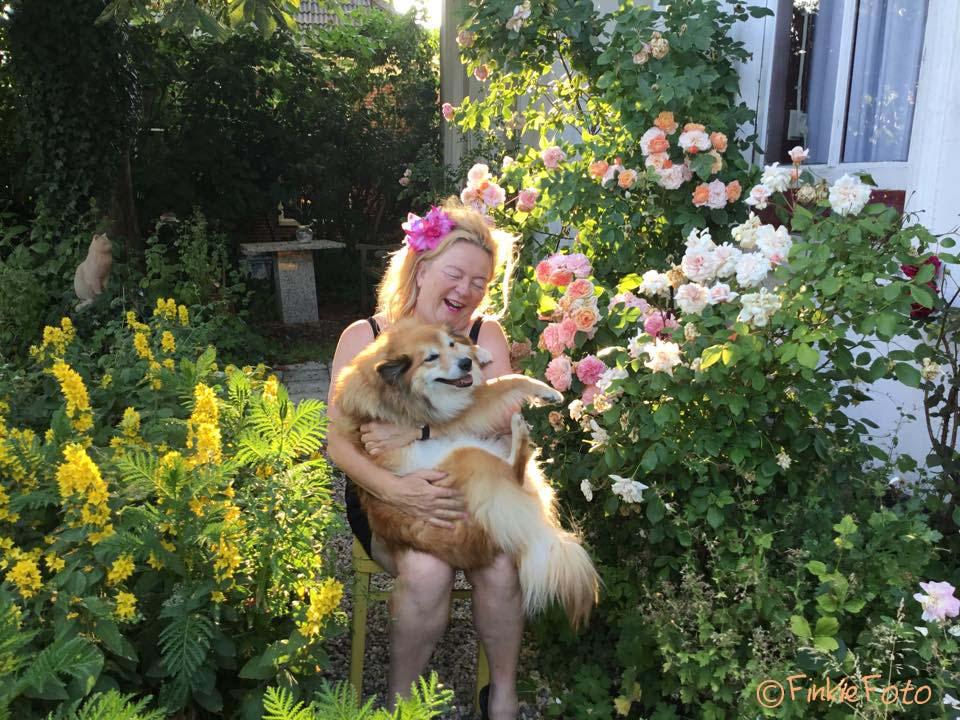 Miss Bera Icelandic sheepdog pregnant---