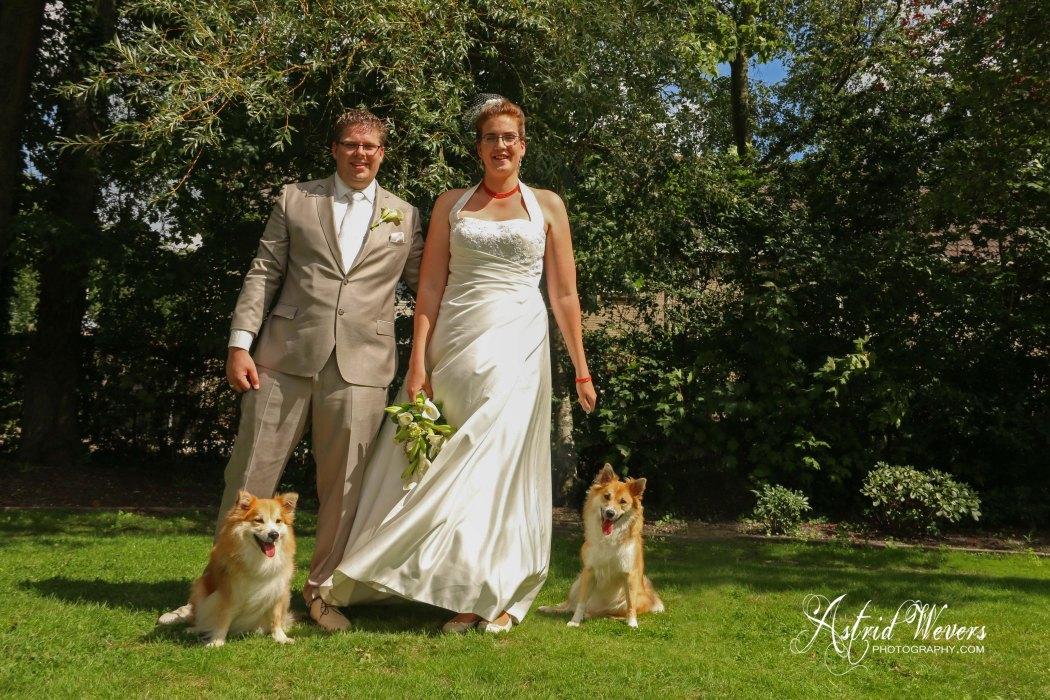 Bruidspaar met IJslandse honden