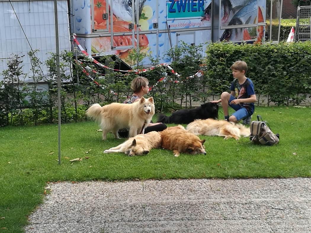 ijslandse honden in Peize Groningen