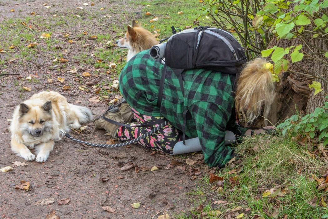 IJslandse honden in Slochteren