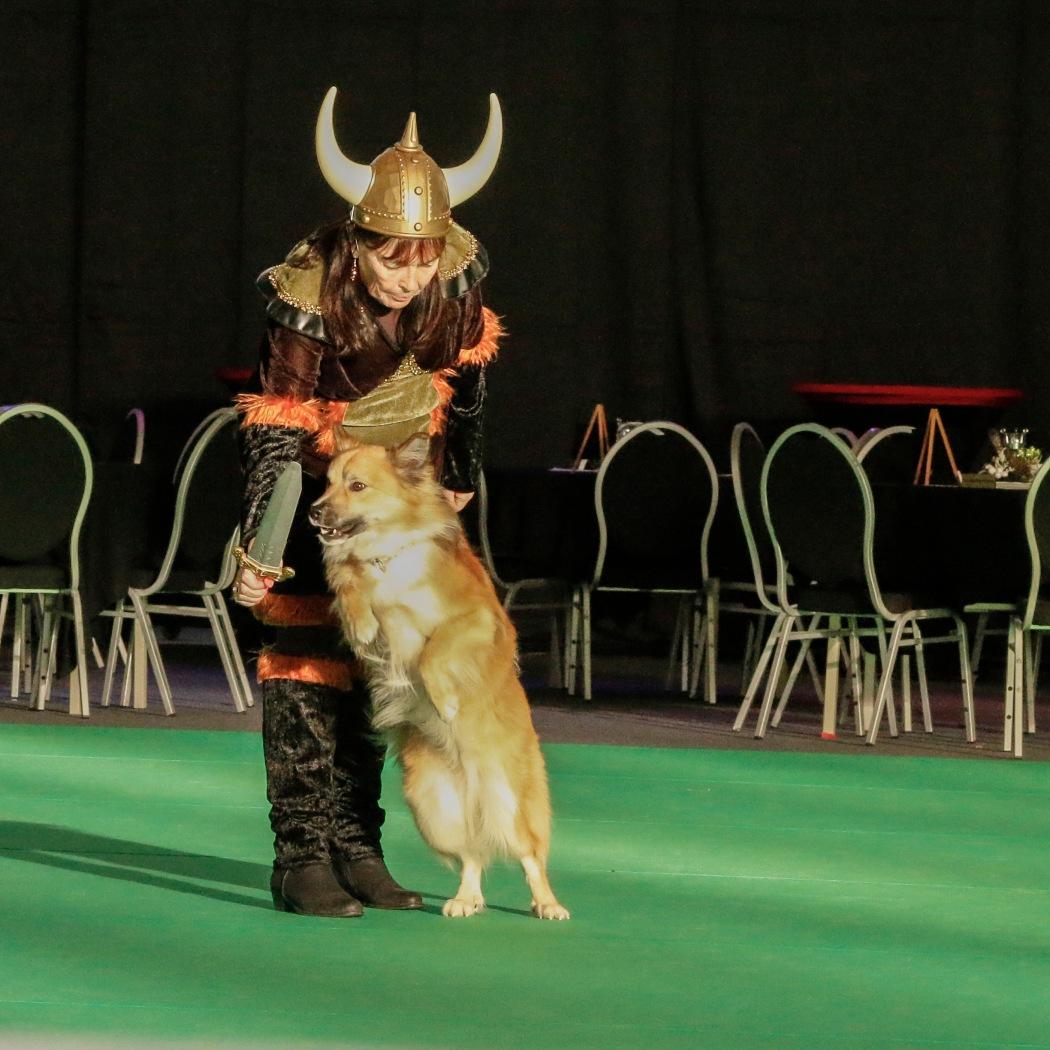 Doggydance Winner IJslandse hond 10