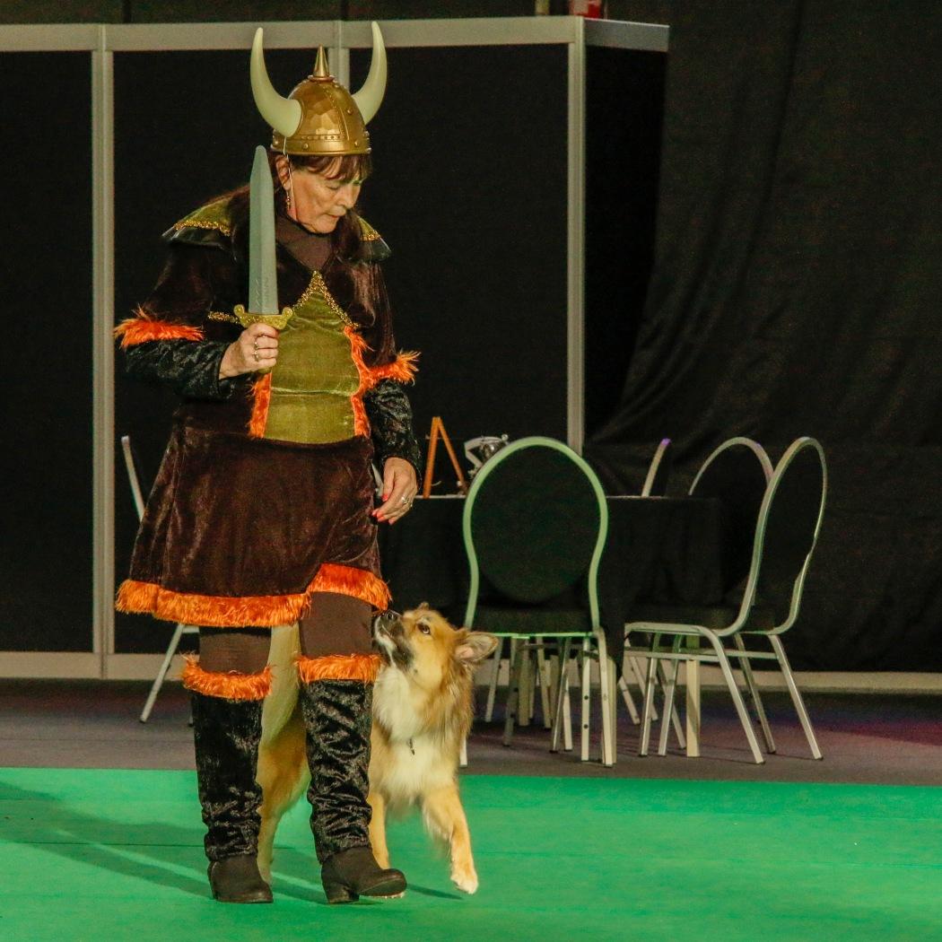 Doggydance Winner IJslandse hond 2