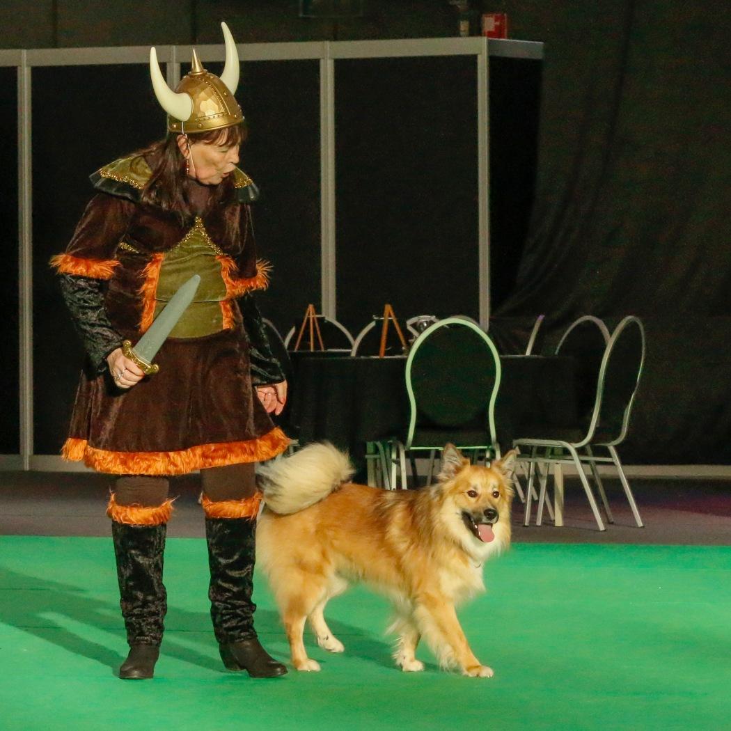 Doggydance Winner IJslandse hond