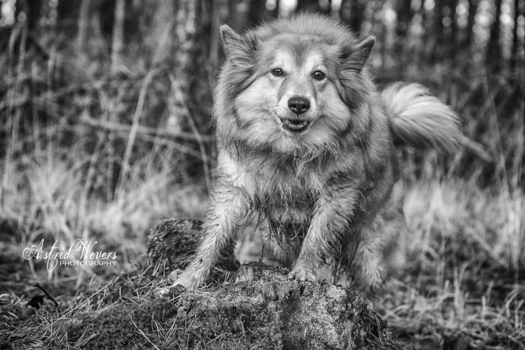 wolfjeBera