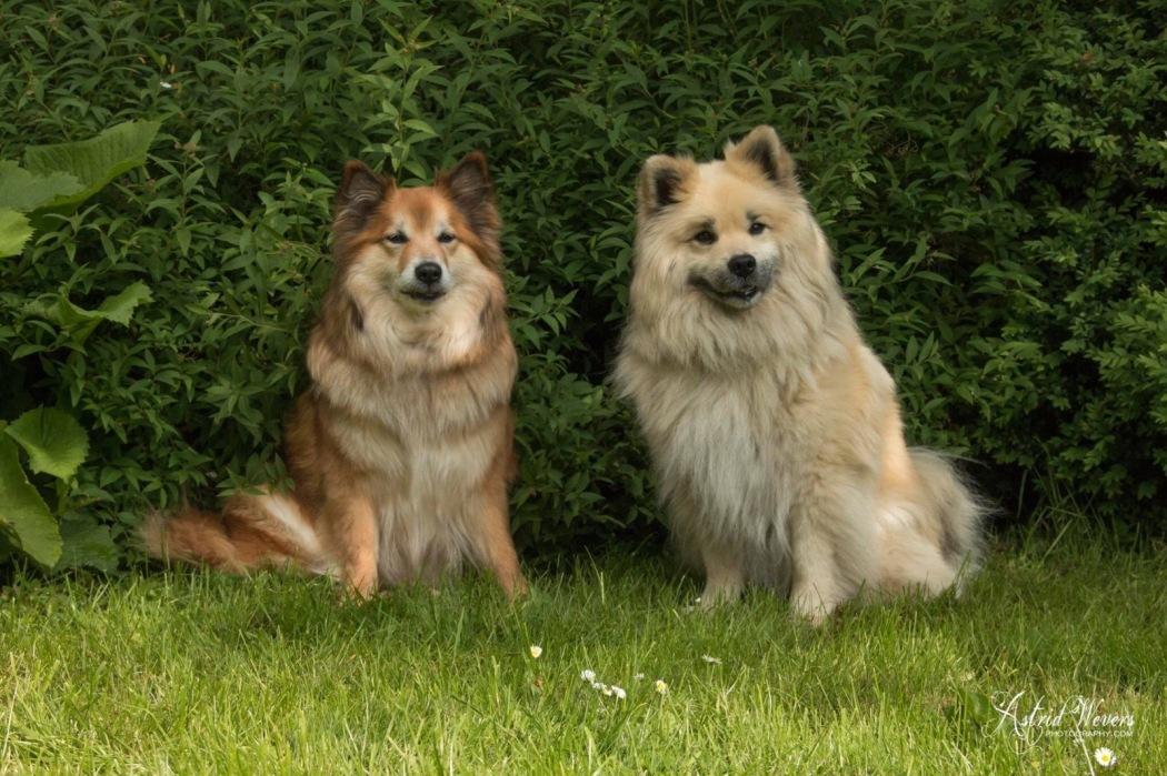 Mis Bera en haar vriendje Gunnar