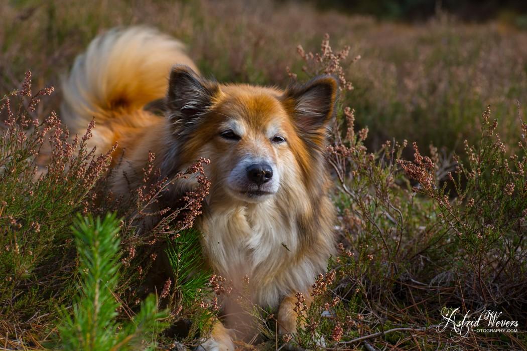 Miss Bera in het bos