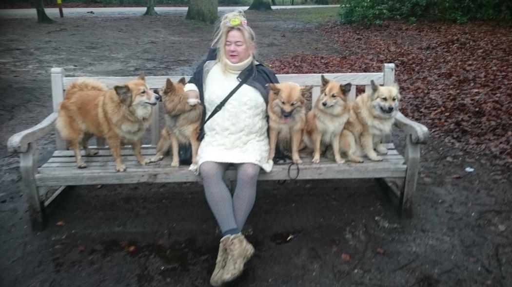 IJslandse hond, Icelandic sheepdog
